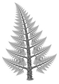 Copac fractal